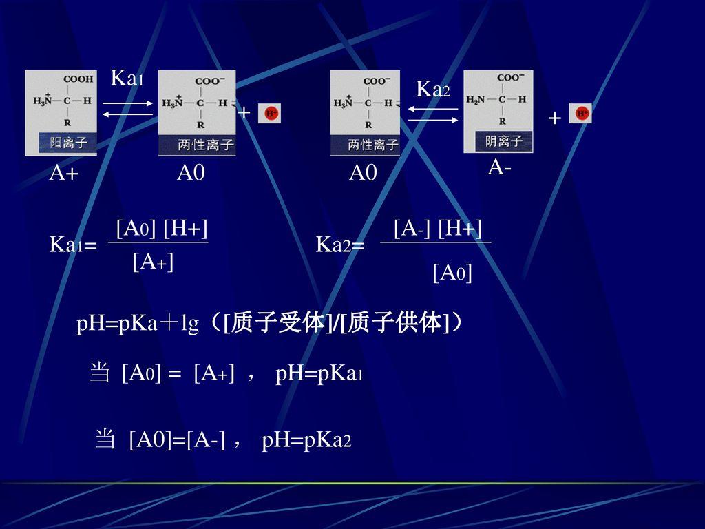 Ka1 Ka2. + + A- A+ A0. A0. [A0] [H+] [A-] [H+] Ka1= Ka2= [A+] [A0] pH=pKa+lg([质子受体]/[质子供体])